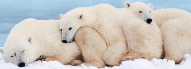 Che cos'è il grande freddo? E' la Groenlandia o un disagio? E' il titolo di un film o un vuoto che dobbiamo riempire?